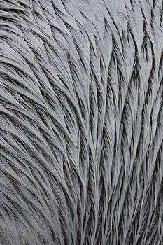 Pattern in Gray 3 by Matt Cormons