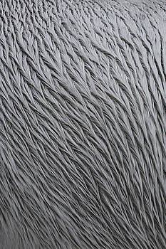Pattern in Gray 4 by Matt Cormons