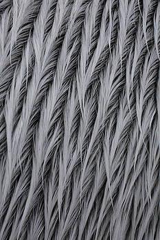 Pattern in Gray 5 by Matt Cormons