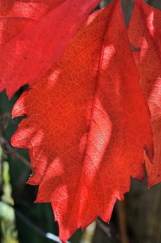 Patterns In Red by Ron Cline