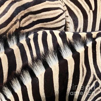 Patterns by Tim Hauf