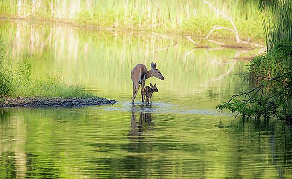 Paulinskill Life by James Figielski by Paulinskill River Photography