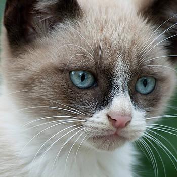 Heiko Koehrer-Wagner - Pauls little cat