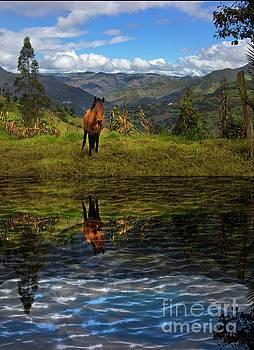 Paute Horse Reflection by Al Bourassa
