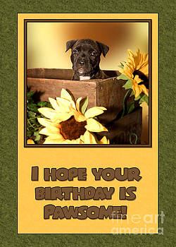 JH Designs - Pawsome Birthday Pup
