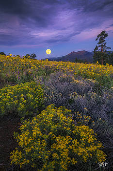 Payoff by Peter Coskun