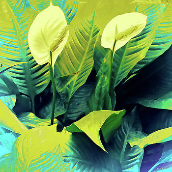 Peace Lilies by Tony Grider