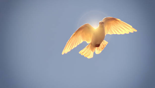 Peace by Philipe David