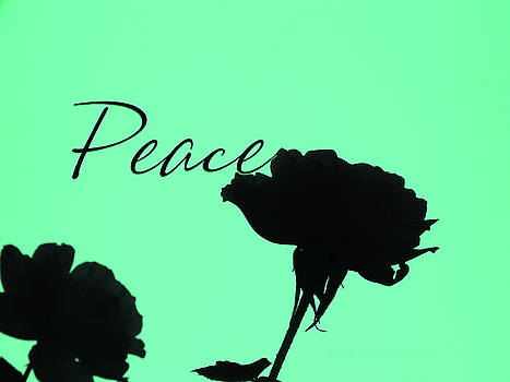 Peace Rose Silhouette - Original Floral Photographic Art and Design by Brooks Garten Hauschild