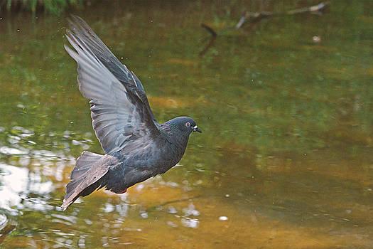 Peaceful flight by Asbed Iskedjian