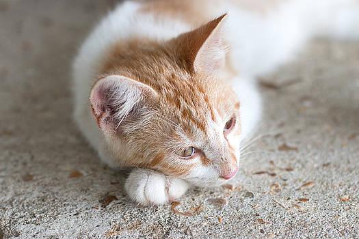 Peaceful Kitten  by Christen Weber