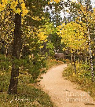 Peaceful Walk by Jim Fillpot