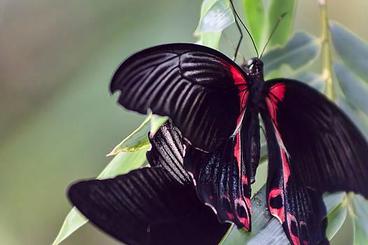Peaceful Wings by Ryan Seek
