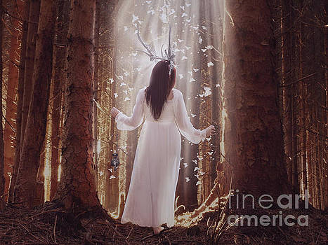 Peacefull Woods by Babette Van den Berg