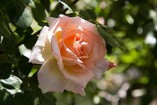 Peach a Peach by Raquel Amaral