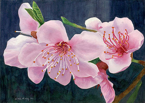 Peach Blossoms by Jane Wong