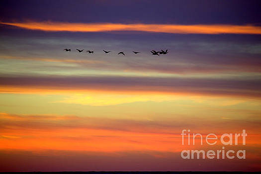 Peach Colors Flight by John Scatcherd
