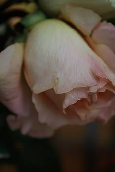 Peach-Cream  Rose by Angelina G T