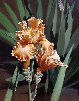 Peach Iris by Linda Merchant