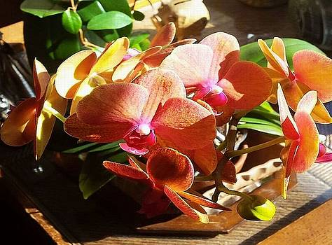 Peach Orchid Blossoms by Deb Martin-Webster