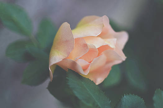 Peach Petals by Betsy Armour