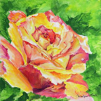 Peach Rose by Carolyn Bell