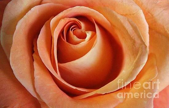Paulette Thomas - Peach Rose