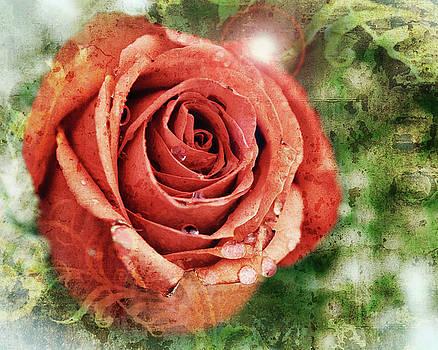 Peach Rose by Sennie Pierson
