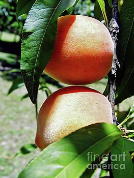 Peaches by D Hackett