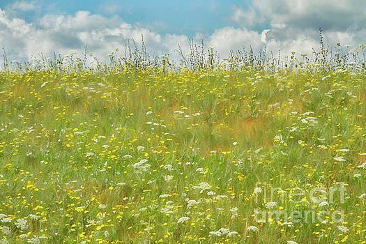 Peachy Field by Marilyn Cornwell