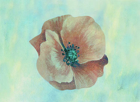 Peachy Keen Poppy Watercolor by Sandi OReilly
