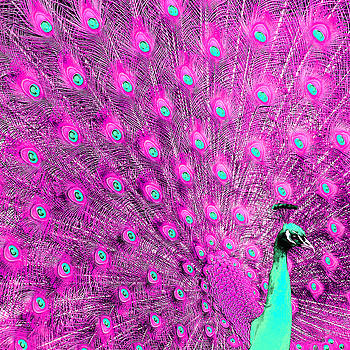 Peacock 2 by Alicia Zimmerman
