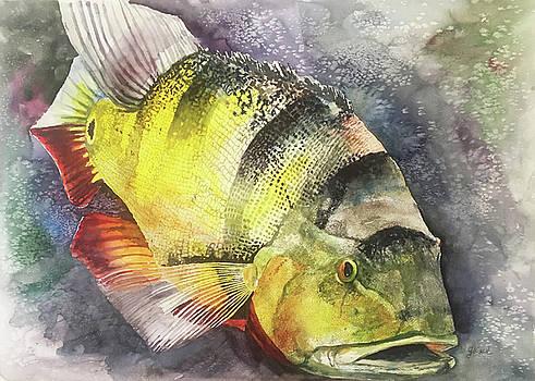 Peacock  Bass by Glen Ward