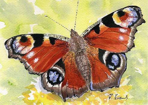 Peacock Butterfly by Frances Evans