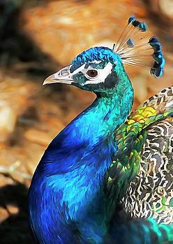 Dennis Cox - Peacock