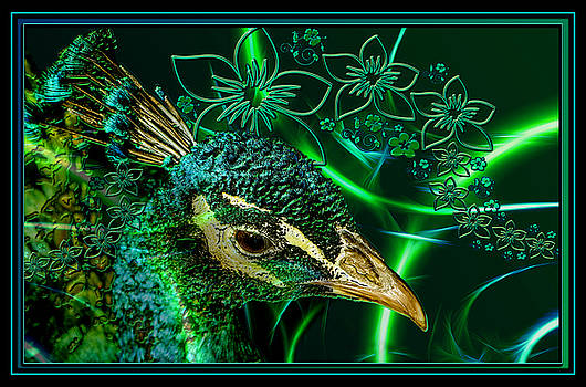 Peacock Dream by Aisha Abdelhamid