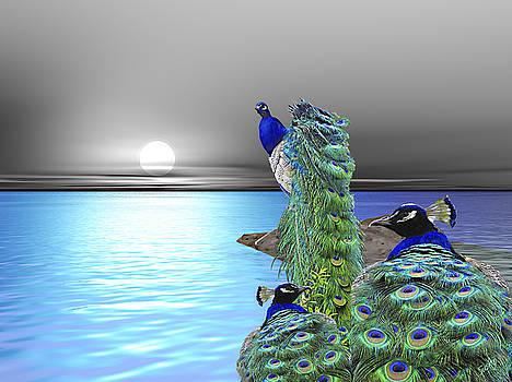 Peacock Fantasy by Susanna Katherine