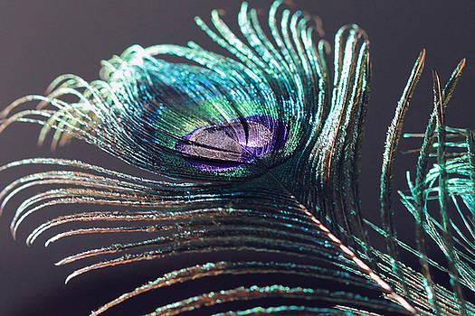 Angela Murdock - Peacock Feather in Sun Light