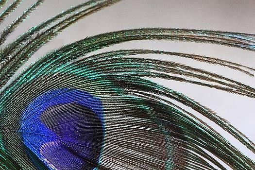 Angela Murdock - Peacock Feather Art