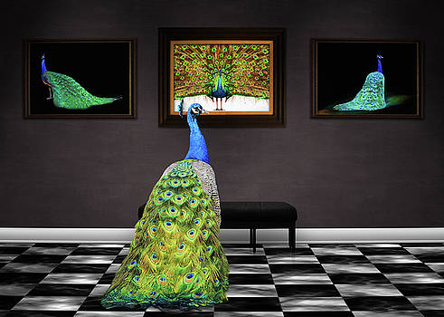 Peacock Gallery by Steven Michael