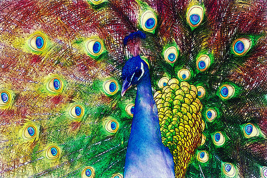 John K Woodruff - Peacock in Bloom