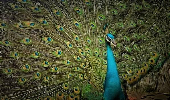 Peacock by Janice MacLellan
