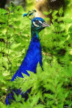 Peacock by Ken Morris