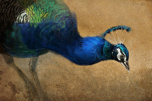Peacock Light by Aaron Blaise