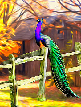 Peacock Perching IIl by Terry Shoemaker