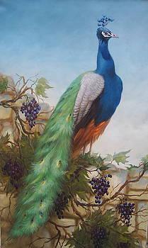 Peacock by Sergey Zinovjev