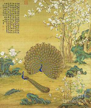 Peacock Spreads its Tail by Guiseppe Castiglione