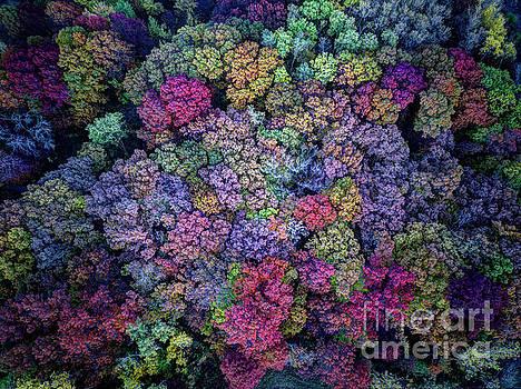 Wayne Moran - Peak Colors Minnesota Parks - Lebanon Hills Park Dakota County