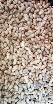 Peanuts or Groundnuts by Mudiama Kammoh