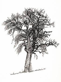 Martin Stankewitz - pear tree,plein air drawing study